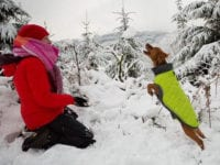 how to take care of your dog's paws in the winter