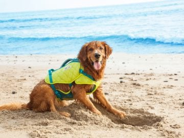 Dog on the beach wearing Outward Hound Standley Sport Experienced Swimmer Life Jacket for Dogs
