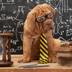 Smart Dog IQ Test