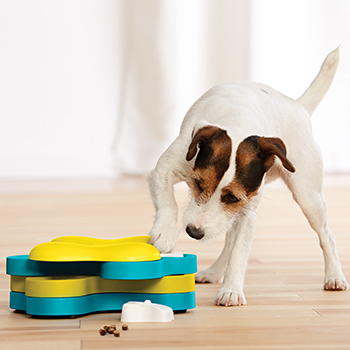 Jack Russell Terrier pawing at Outward Hound's Dog Tornado puzzle game to get treats