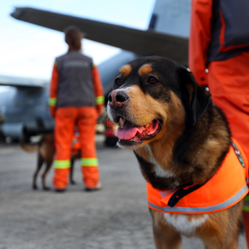 Search and rescue dog standing with handler waiting to board plane