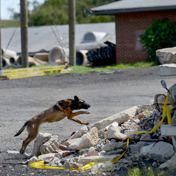 SAR dog races up a pile of rubble
