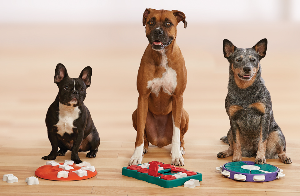 Three dogs sitting in front of Outward Hound Dog Puzzles