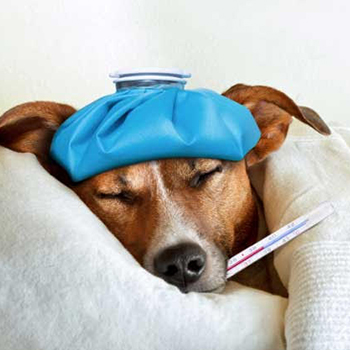 What Medicine To Give A Dog With An Upset Stomach