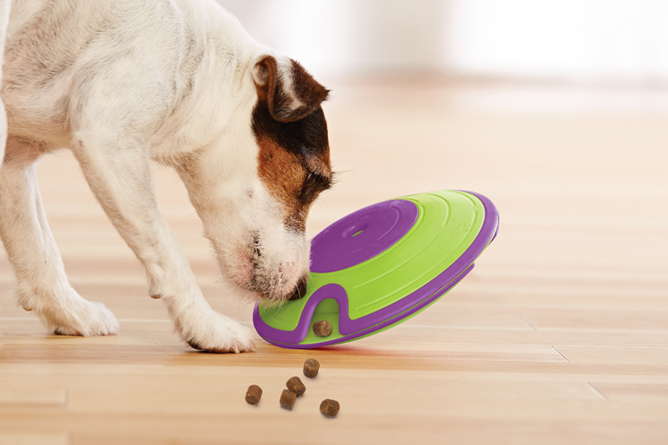 Interactive Dog Toys How To Pick The Best Game For Your Pup