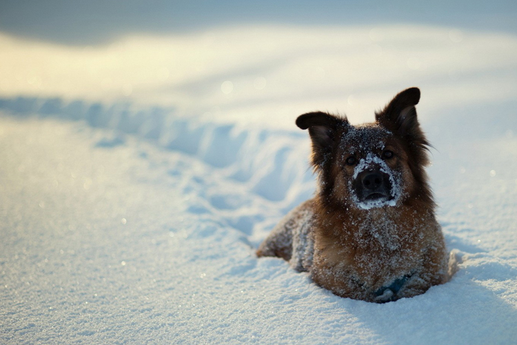 how cold weather affects dogs