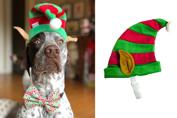 Christmas Hats For Dogs.25 Dogs Dressed Up For Christmas Holiday Dog Photos