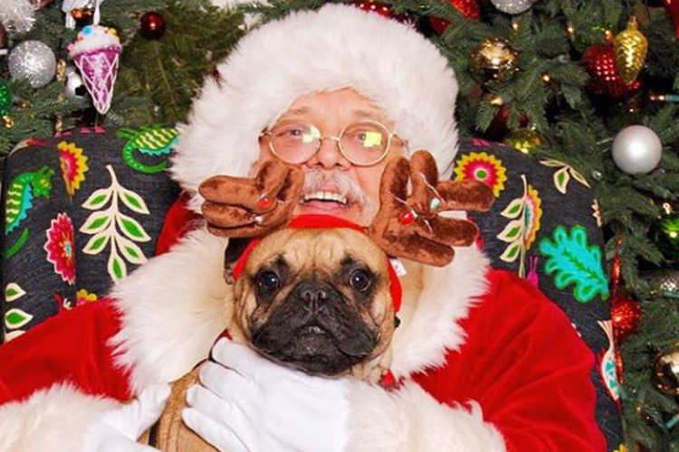 Christmas Dog.25 Dogs Dressed Up For Christmas Holiday Dog Photos
