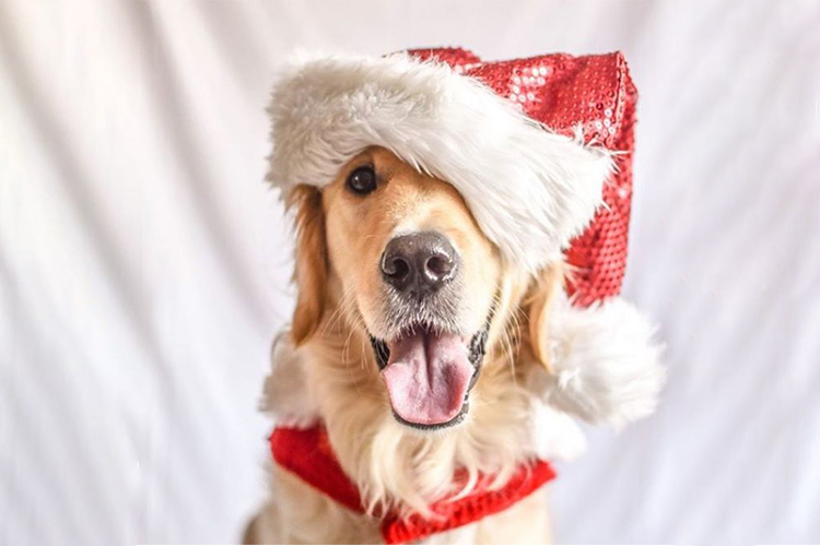d297b82f26a81 dog-wearing-santa-hat-dressed-up-for-christmas