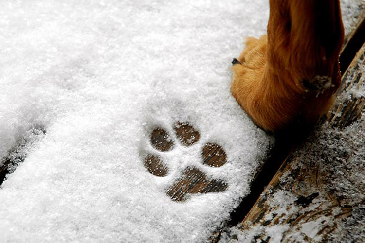 you can now be fined for leaving your dogs outside in the cold