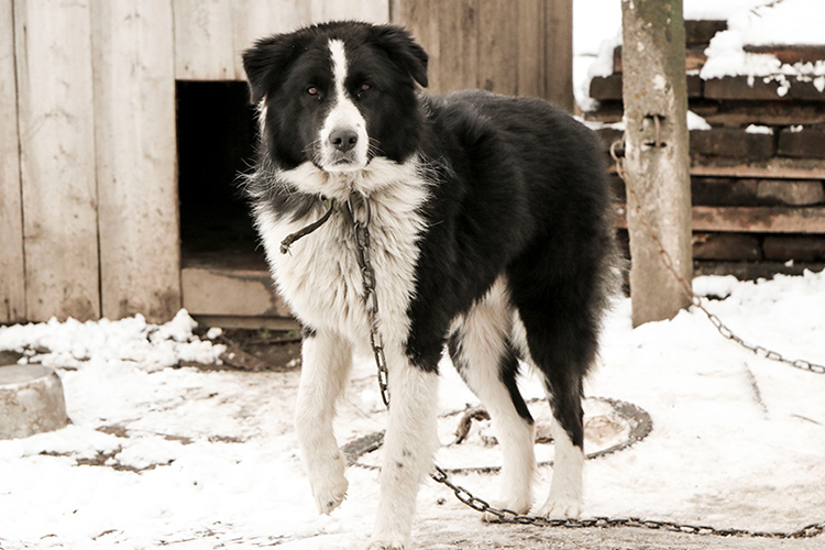 laws protecting dogs left outside in the cold