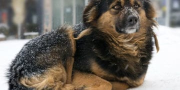 law protecting dogs left outside in the cold