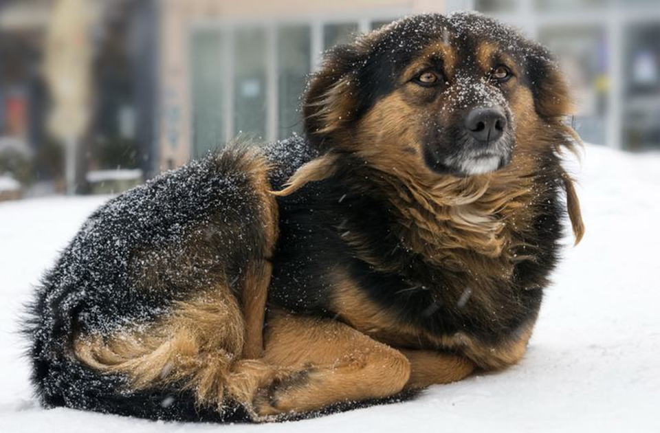 Laws Protecting Dogs Left Outside in the Cold   Libre's Law