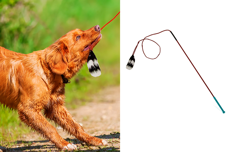shop flirt poles for dogs and tail teasers by outward hound
