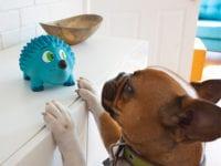 fun dog toys