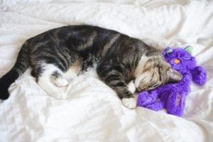 cat won't sleep at night