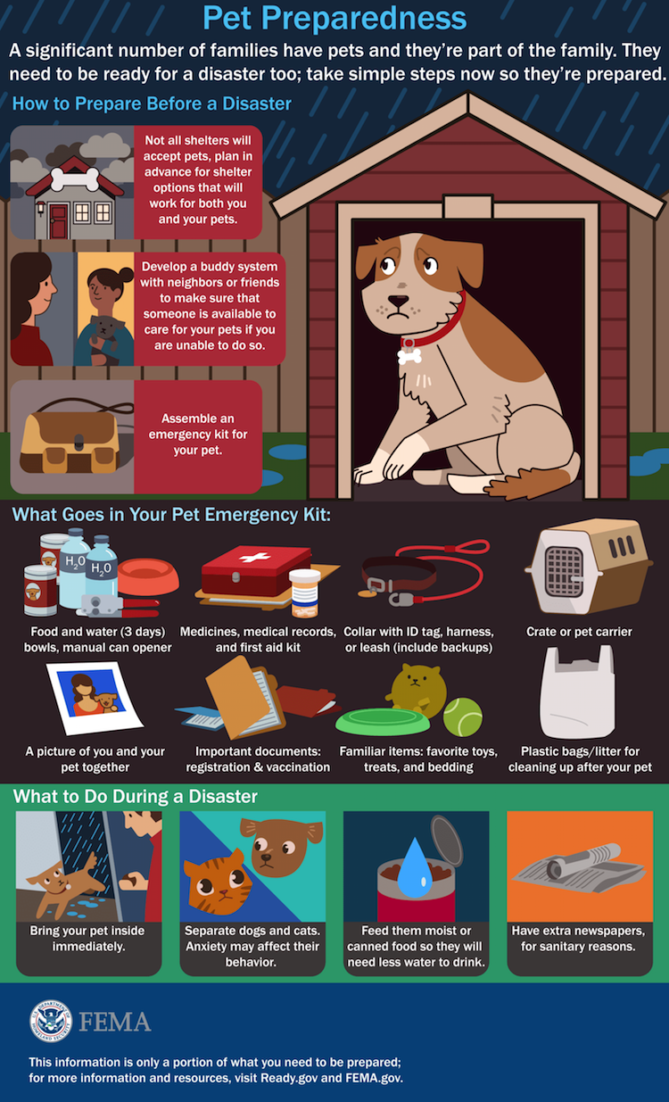pets in hurricanes check list