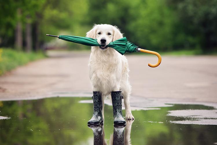 pets in hurricanes