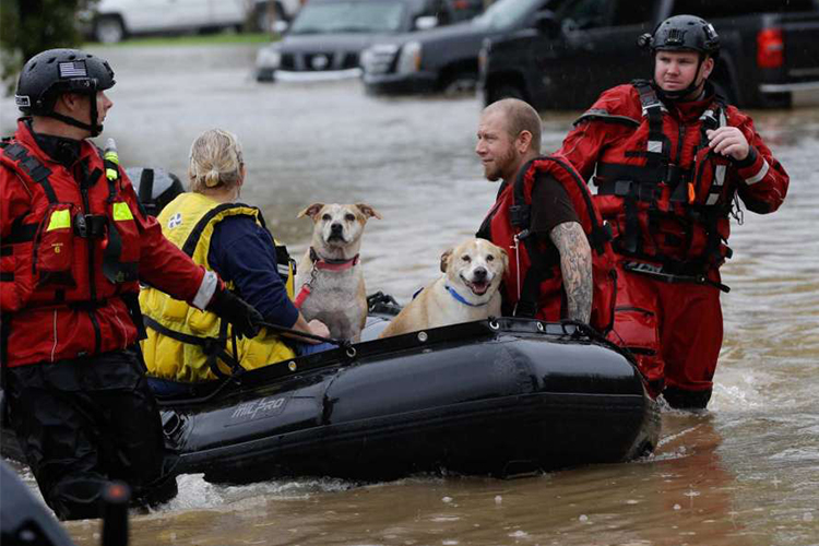 rescuers help a family and pets in hurricane