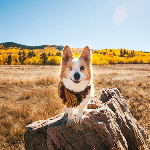 dog hiking during fall