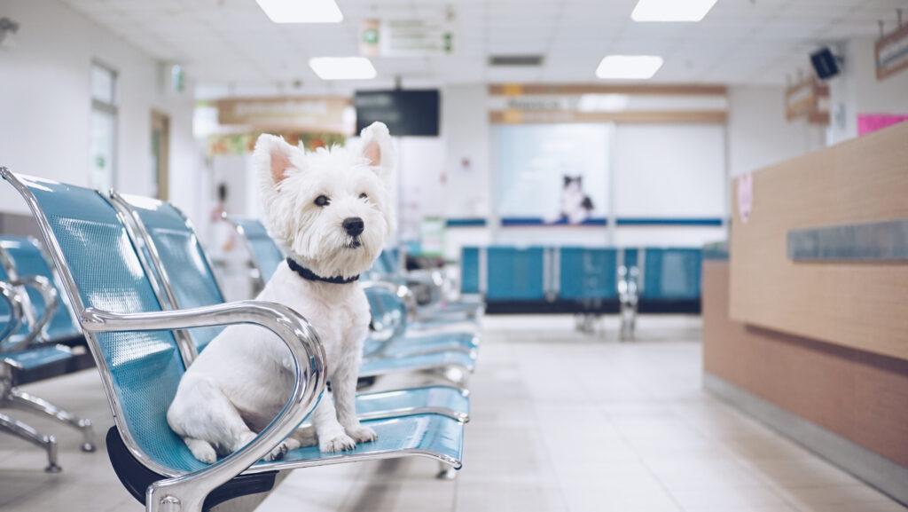 coronavirus-in-dogs-dog-in-waiting-room