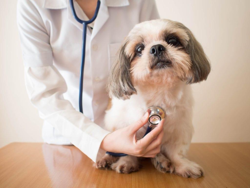 coronavirus-in-dogs-dog-at-vet
