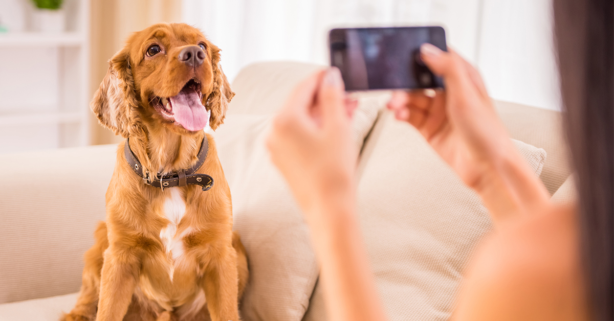 8 Dog Tiktok Accounts To Follow Furtropolis